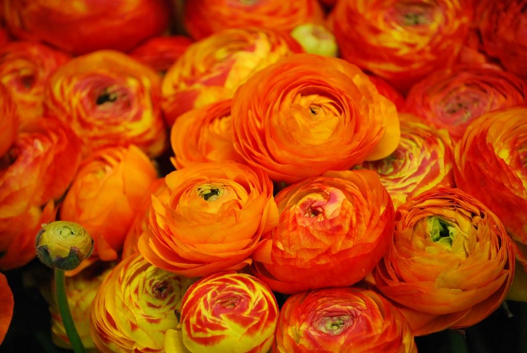 Flowers dizy foto for Equilibrio sinonimi